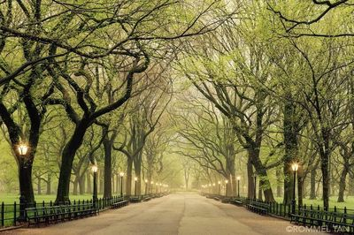 The Mall at Central Park by Rommel Tan - The Best Photos and Videos of New York City including the Statue of Liberty, Brooklyn Bridge, Central Park, Empire Stat