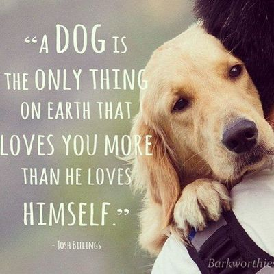 Love Dogs Quotes Wallpaper : A Dog love quotes life quotes quotes animals quote dogs life... / puppies galore - Juxtapost