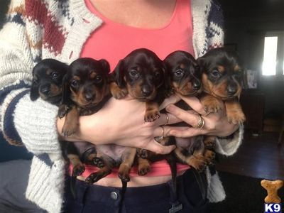 My RETIREMENT plan - no, not a puppy mill -- I am keeping the WHOLE LITTER!