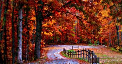 �€œDo not go where the path may lead, go instead where there is no path and leave a trail.�€ Ralph Waldo Emerson