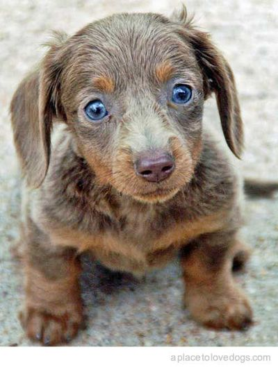 does a cuter dog exist? its possible, but not probable.