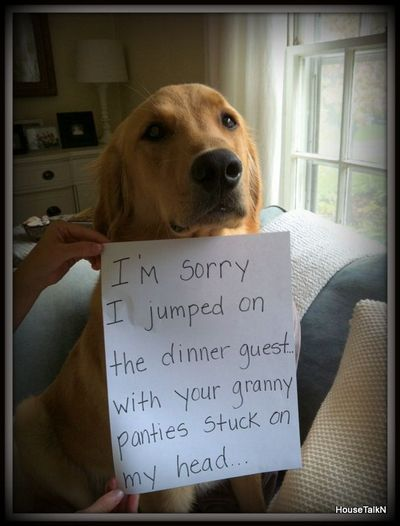 Dog shaming - everyone needs to google or search Pinterest for Dog Shaming. Some of them are absolutely hilarious!!!