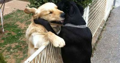 These dogs have changed our hearts, our lives, our world. Perhaps more so than these important cats.