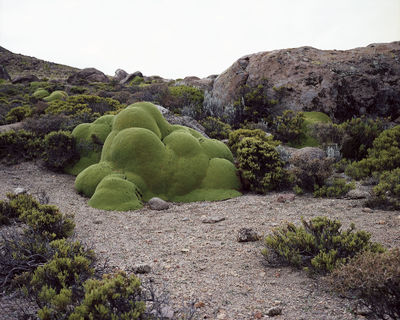 The Oldest Living Things in the World.