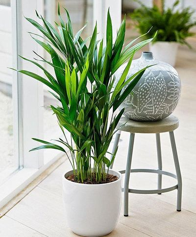 The best air purifying plants that are super low maintenance and hard to kill.