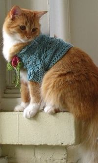 A knitted sweater for Miss Kitty.....she must be an old soul....mine would have had it ripped off before the camera clicked...