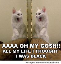 I thought I was black | Funny Pictures, Funny Images, Funny Quotes