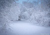 Does your heart jump a little on a beautiful winter day? Are you ready to run outside and start shooting? I know how you feel, I love snow photography too. Here
