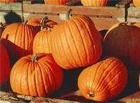 MOM Tip: Preserve your pumpkins for the entire season by applying  a coat of liquid floor cleaner with a damp cloth.  This does NOT preserve pierced or carved pumpkins.