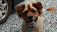 29 Dogs Forced To Live With The Most Hilariously Horrible Haircuts Of All Time