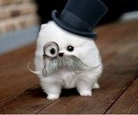 I don't know what this is, but it sure looks cute in that monocle.