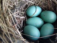 ~ beautiful nest-nature makes the more perfect turquoise
