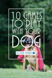 You may be wondering what games you can play with your dog. Here's 10 games to play with your dog that they will love!