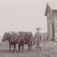 Antique Cabinet Photo Old Man with His Cattle Farmhouse Vintage Photography Male Farm Vintage Photograph Picture Memorial Music CC#10013 $30.00