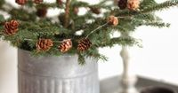Simple living tree in a galvanized bucket or tin can - simple, rustic beauty.