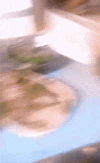 Leave me alone or i'll pee on the table funny gif #gif #funnygif #funny #humor #PMSLweb