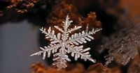 macro photograph of a snowflake by andrew osokin (3)