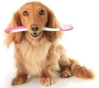 Cleaning Your Dog's Teeth