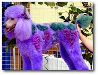 Got grape wine? Extreme dog haircuts !!