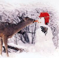Great picture it is from a book called Stranger in the Woods by Carl R. Sams II & Jean Stoick I just read it to the Pre K class that I voluteer at this morning. The kids love the book about feeding the wild animals with the snowman and the very pretty...