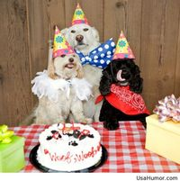 Happy new year funny dogs picture