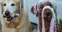 some days you've got the can of silly string in your mouth, and some days you're the dog on the right