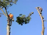 download (1).jpgAcadian Tree Removal and Stump Services, LLC offer Tree removal Services, Stump Grinding / Stump Removal Services, Bobcat Services, Tree trimming & Pruning, Lot & Landing Clearing and storm & Emergency Services to both ...