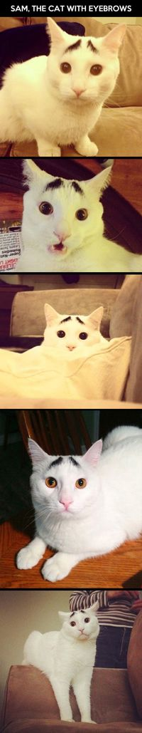 The cat with eyebrows - funny pictures #funnypictures