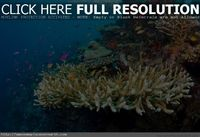 Apo reef marine, national park, Philippines