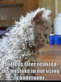 funny cat pictures - Lolcats: Mittens later realized his mistake