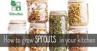Grow sprouts and microgreens in your own kitchen with minimal supplies and have fresh local superfoods on your table all year!