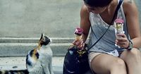 Istanbul-a girl, a cat, the ice cream!, via Flickr.