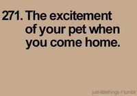 and how it doesn't matter if you were gone all day, or just carried out the trash...the excitement is the same!