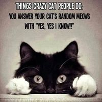 crazy cats, cats and people.