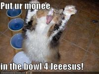 I can't help it. every time I look at this LOLcat I laugh so it's goin up