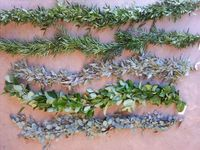 From Plumosus & Pittosporum to Seeded Eucalyptus & Salal, there's guaranteed to be a 'flavor' for EVERYONE!! These 5 are all single item garlands and they are as follows (top to bottom): Italian Ruscus, Podocarpus, Seeded Euc, ...