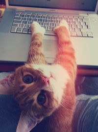23 Cats Who Want You To Blow Off Work For Snuggle Time