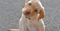 storymeister: PHOTO OF THE DAY I LOVE LITTLE PUPPY! View Post shared via WordPress.com