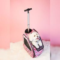 Petique's 5-in-1 Pet Stroller makes exploring the world with your pets easier! With five features in one product, you can go from a stroll around the farmer's market with the stroller feature to hiking in the mountains with the backpack featur...