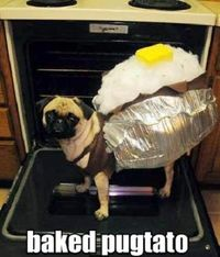 Baked pugtato. This made me laugh pretty hard. LOL