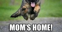 This is right on at my house especially with the puppy!