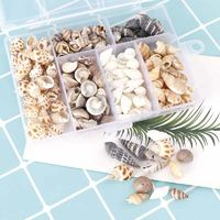 100Pcs/Box Natural Mini Shells DIY $10.99