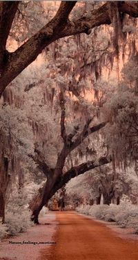 """Savannah, Georgia. """"The mossy Spanish oaks of Savannah allow for the most romantic setting. Humid southern nights are entrancing. You can still hear the whispers of those who meandered down the bricked walkways and dusty lanes, On occasion eerily rem..."""