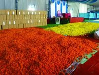 41,444 kgs of marigolds sent from Bengaluru airport to Dubai make Guinness record