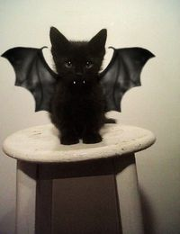 "Bat Cat-If I were the kind of person that dressed up their pets for halloween, i would say ""that's a really cute halloween animal costume."""