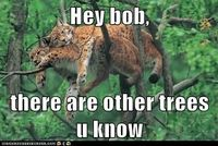 this would be me if i were a large tree climbing cat. constant tree snuggles