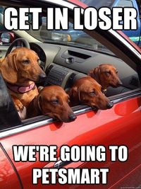 get in loser were going to petsmart - omg i love this!