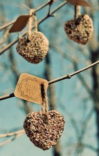 For the Birds (my Dad would love these): -3/4 cup flour -1/2 cup water -2 1/2 teaspoons unflavored gelatin -3 tbsp corn syrup -4 cups birdseed Mixing bowl Cookie cutter (these were made using a heart-shaped one) Nonstick spray (or vege...