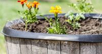 Container Gardening, Mixing Vegetable and Flowers in the Same Container