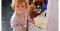 What cake? We didn't see any cake...Animal humor, toddler humor